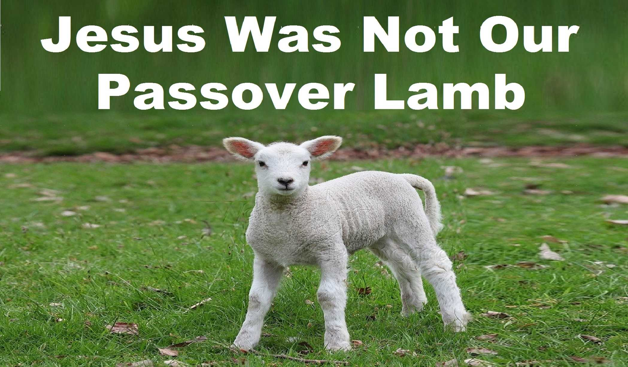 Jesus Was Not Our Passover Lamb - Jews for Judaism