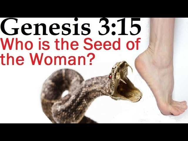 Genesis 3 15 Who Is The Seed Of The Woman By Rabbi